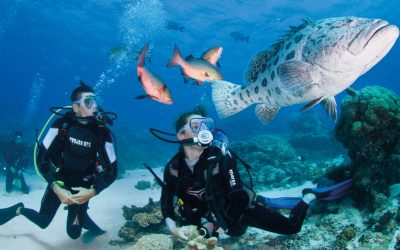 Cairns Edu-Tourism a major drawcard for international students