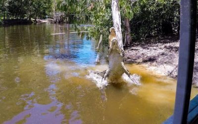 Hartleys Crocodile Adventures keep Best Semester Abroad students on their toes!